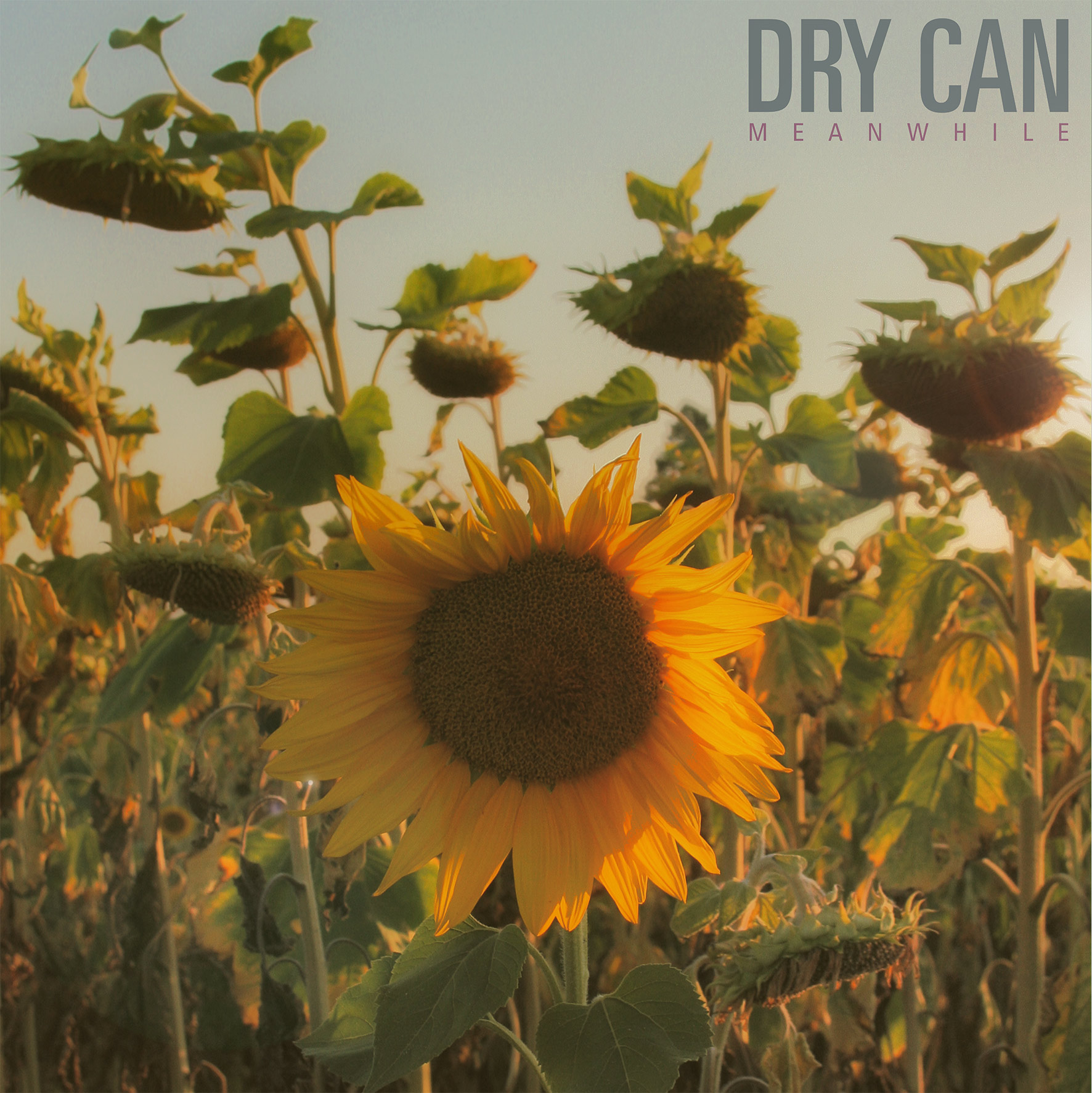 dry can, meanwhile, path, aside, wild, grunge, anne, antoine