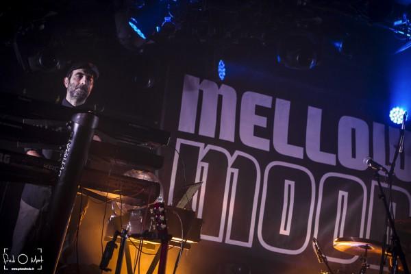 mellow mood, la cave à musique, mâcon